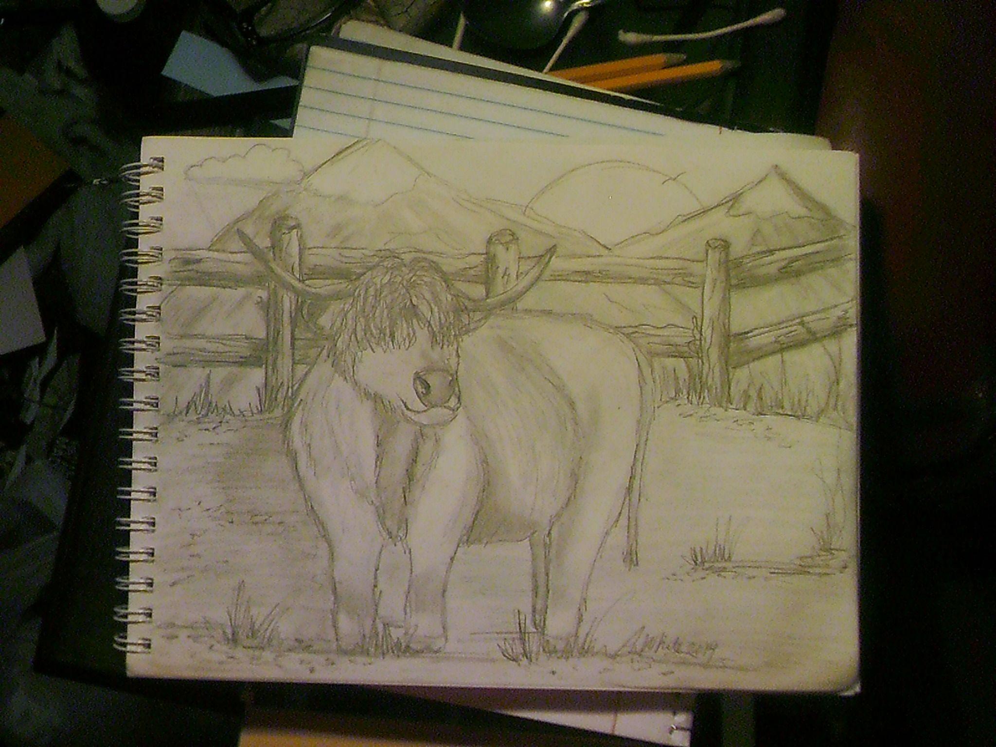 Cow, pencil illustration.