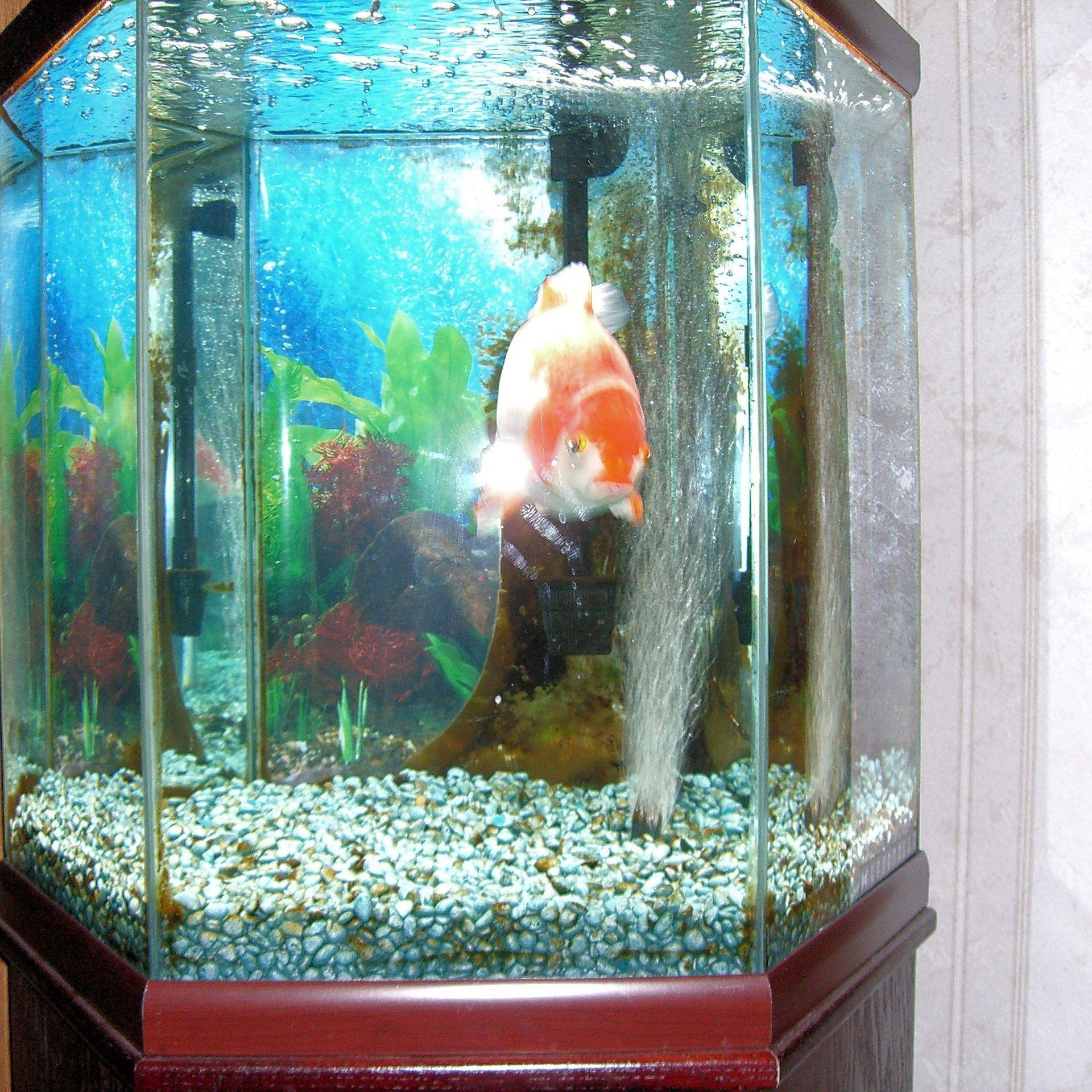 Homemade Fish Tank Decoration Ideas Unique Does Aquarium Tank