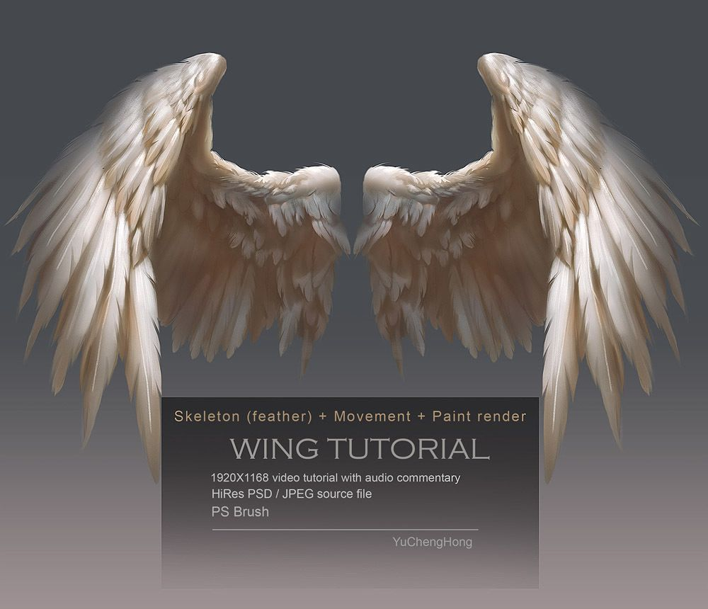 Wing Tutorial | Pinterest | Skeletons, Anatomy and Audio