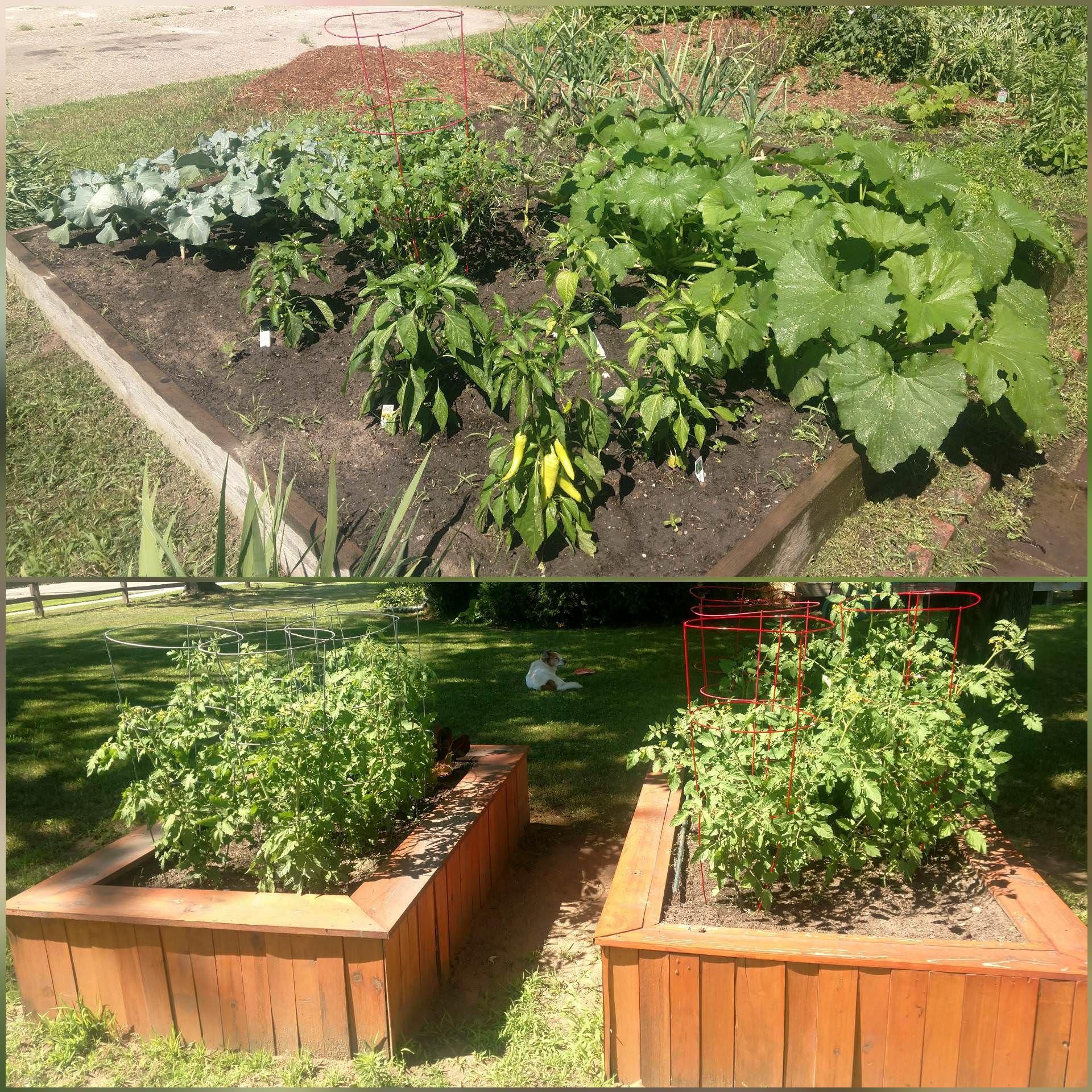 Nothing Extraordinary But Still My Favorite Part Of Summer #Gardening