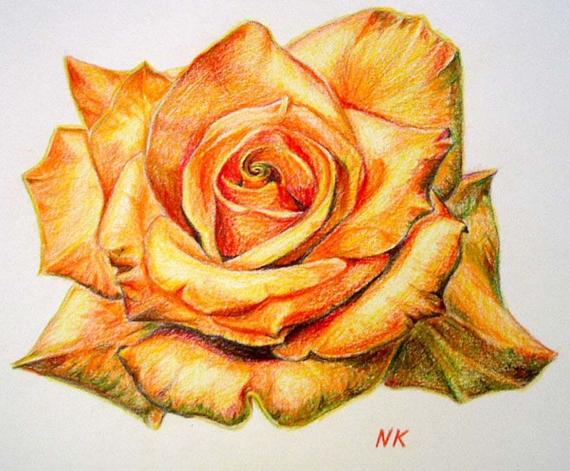 45 Beautiful Flower Drawings And Realistic Color Pencil Drawings Flower Drawing Beautiful Flower Drawings Color Pencil Drawing