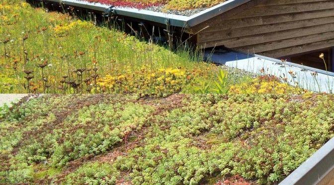Carport Mit Dachbegrunung Pflanzen Carport Pinterest
