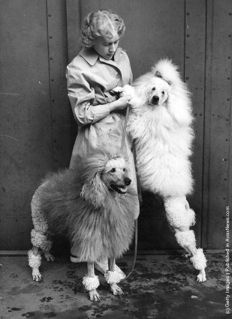 A young woman with two poodles.