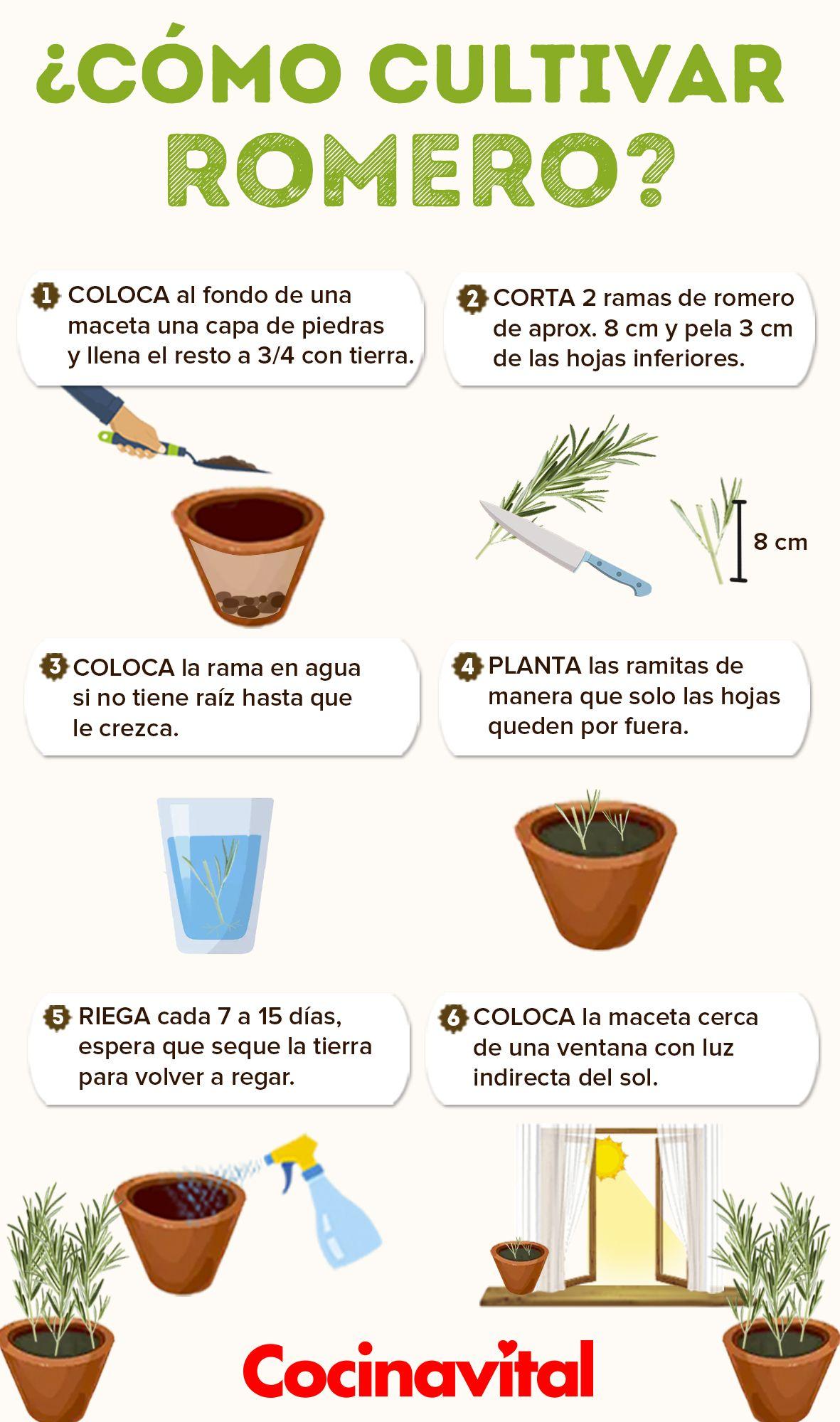 Cómo cultivar romero en macetas para decorar tu cocina | Plantas para  cocina, Cultivo de plantas, Jardín de vegetales