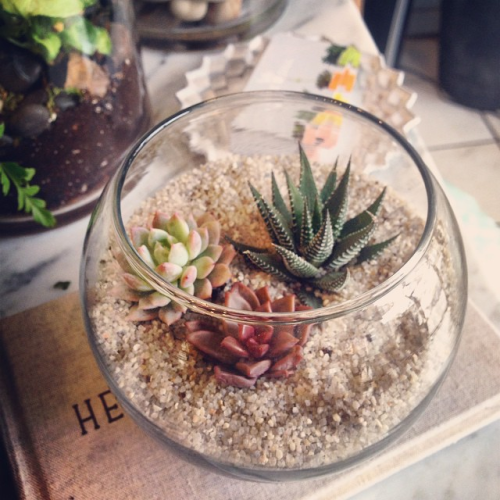 Succulent Terrarium At The Sill Shop At 84 Hester Street In Nyc