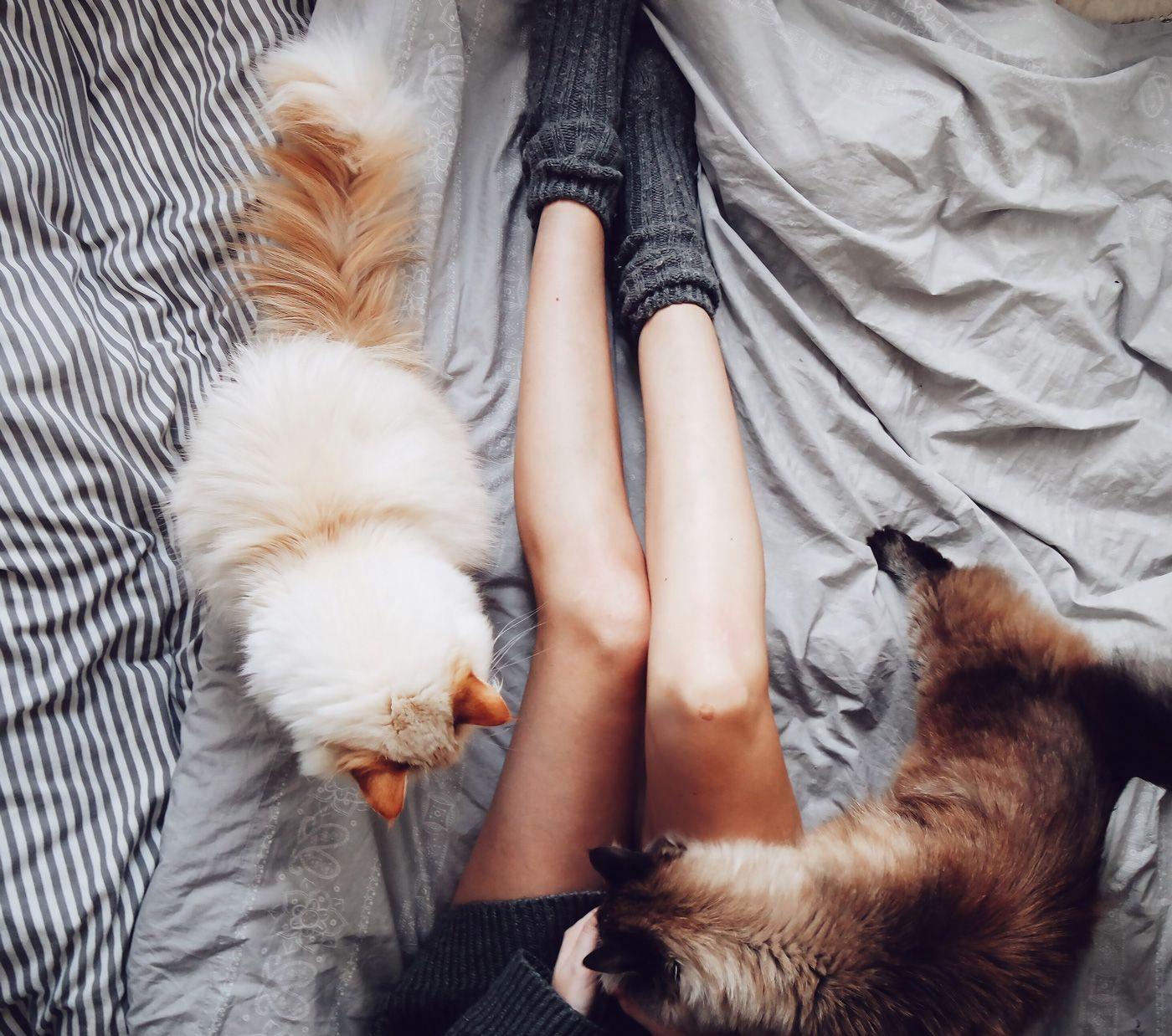 Meine Erfahrungen mit Katzenhaltung - bekleidet - fashionblog / travelblog / interiorblog Germany