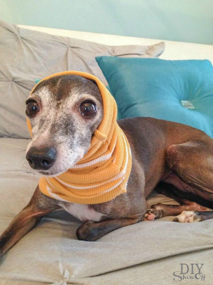 Easiest no sew small dog snood infinity scarf tutorial diy diy small dog snoodinfinity scarf tutorial no sew diyshowoff italiangreyhound diy pets solutioingenieria Image collections