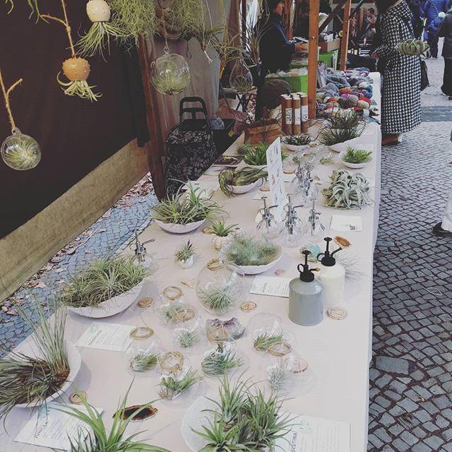 Luftpflanzen Berlin good mood at #boxhagenerplatz today until 3.30pm #berlin