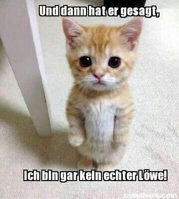 Katze Lowe Spruche Pinterest Lowin Katzen Und Lustiges Tier