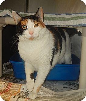 Newport Nc Domestic Shorthair Meet Cookie A Cat For Adoption Http Www Adoptapet Com Pet 16804660 Newport North Carolina Cat Adoption Pets Pet Adoption