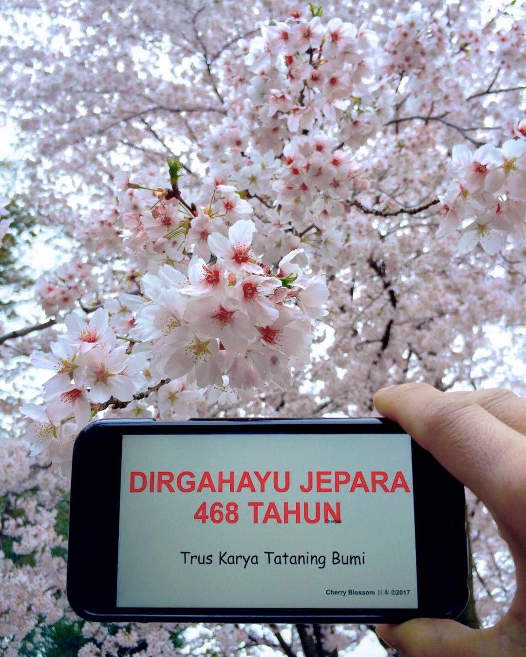 Ucapan Spesial Mas Nadjebs Dari Negeri Sakura Jepang Dirgahayu Jepara468 Instagram Posts How To Dry Basil Cherry Blossom