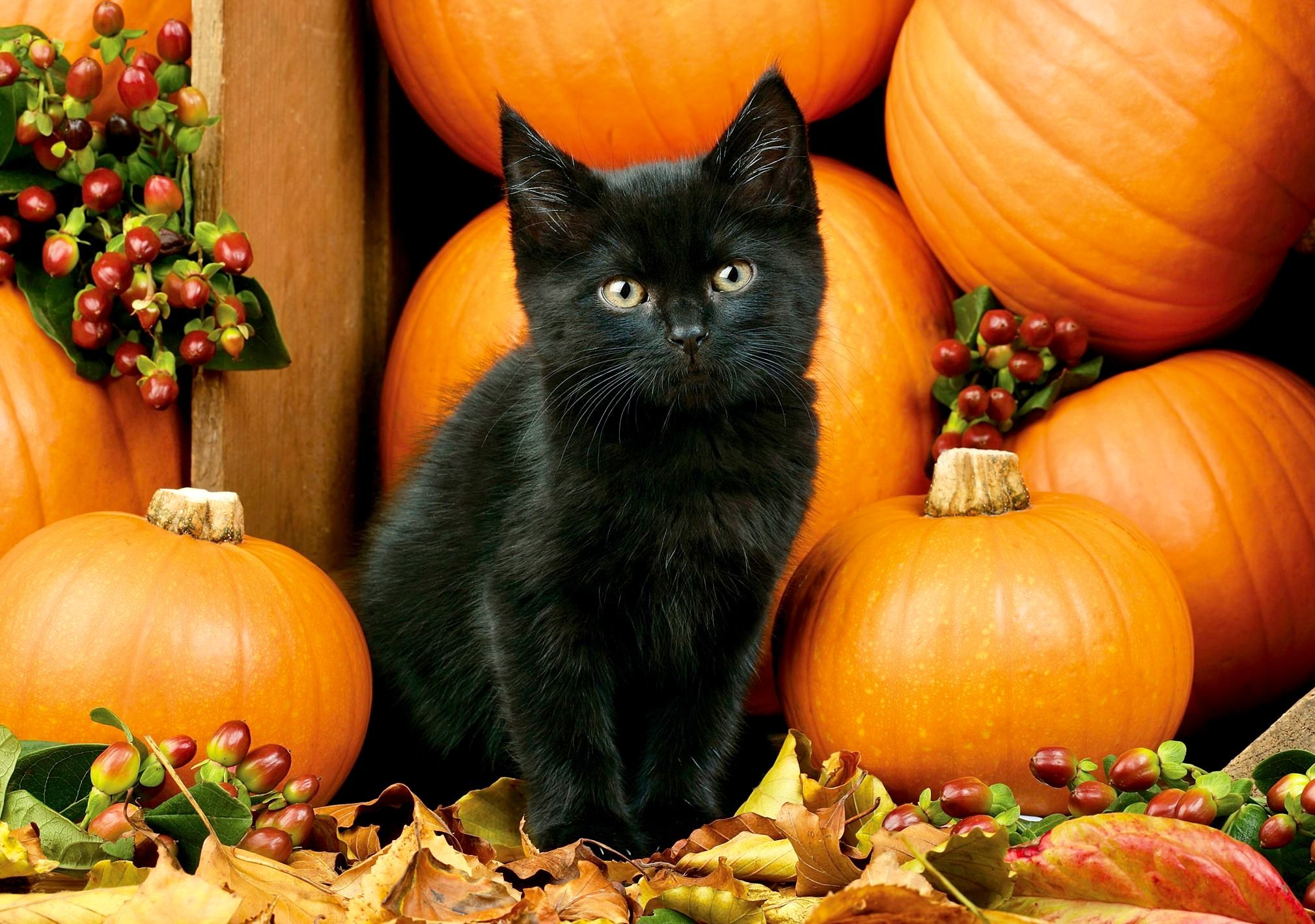 Pin By Kathy Anderson On Halloween Black Cat Halloween Cat Wallpaper Halloween Animals