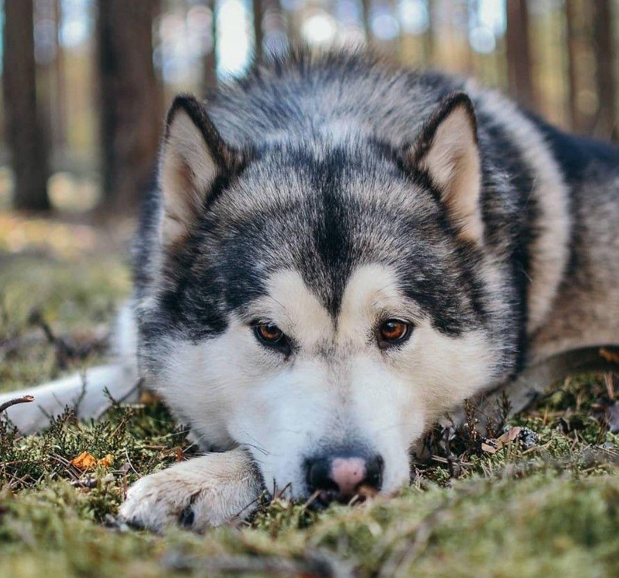 50 Native American Indian Dog Names American Indian Dog Native American Indian Dog Dog Names
