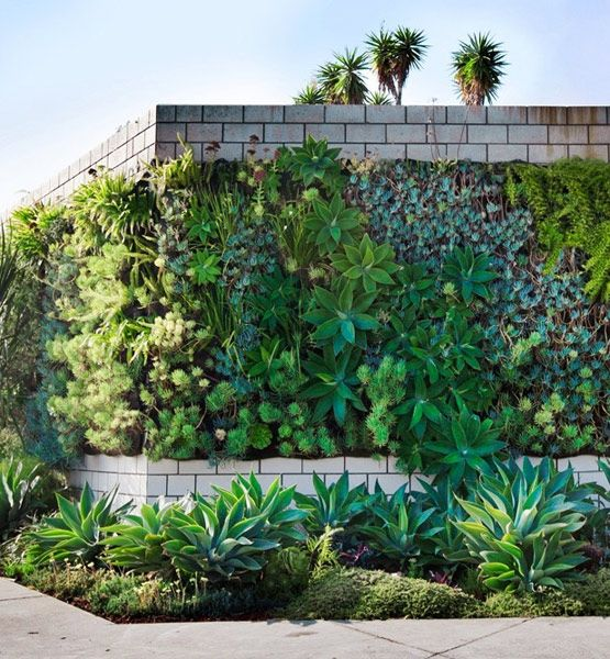 Green Wall : Located In Los Angeles, The Smog Shoppe Is An Event Space  Rimmed