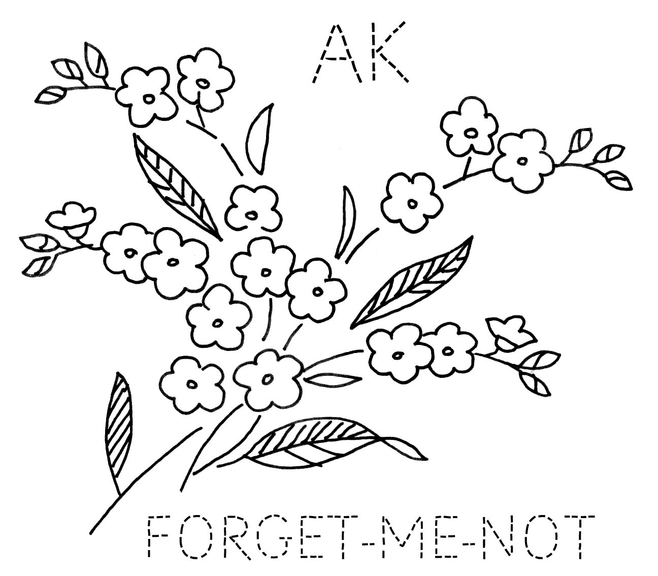 Forget me not flower coloring page on forget macromedia forget me not flowers alaska google search tree top tees forget me not flowers alaska google search ccuart Image collections