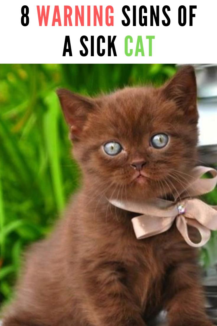 8 Warning Signs Of A Sick Cat Sick Cat Cats Funny Cats