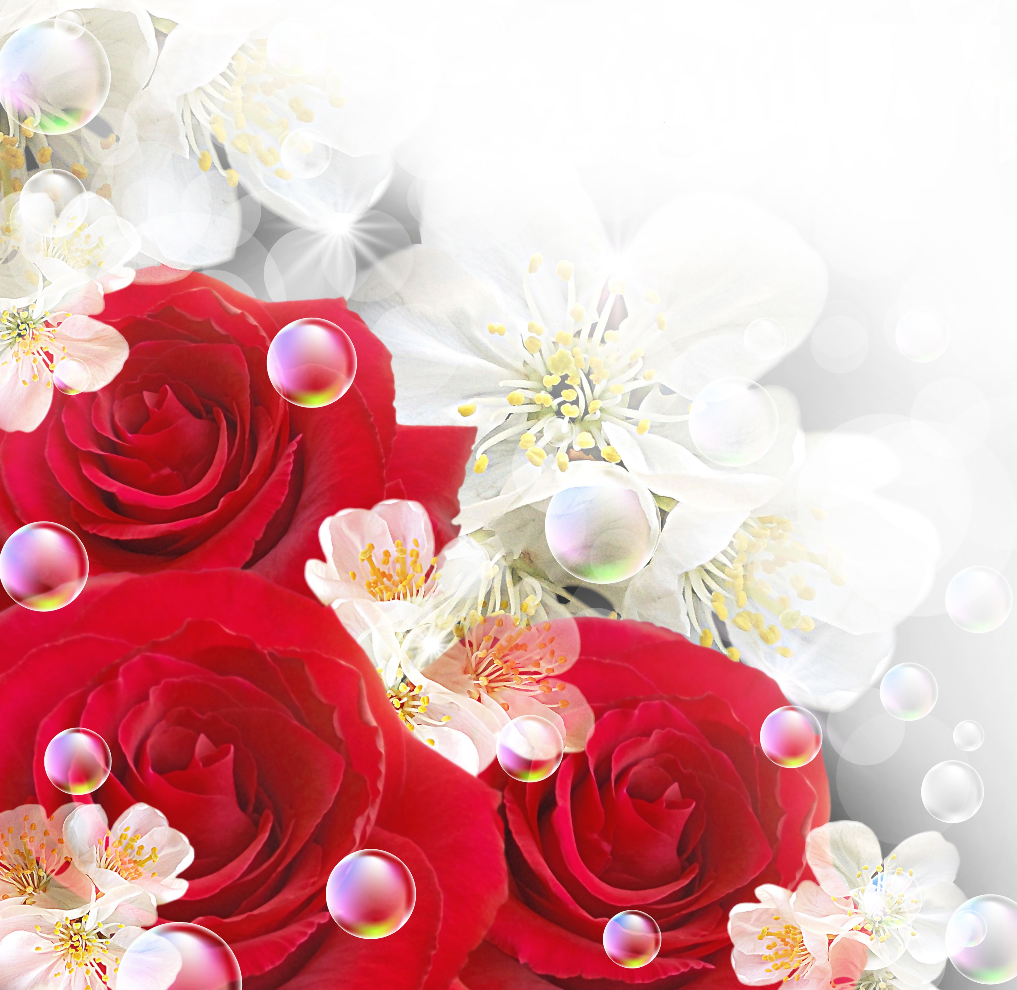 Red And White Background Viewing Gallery For Red And White Roses