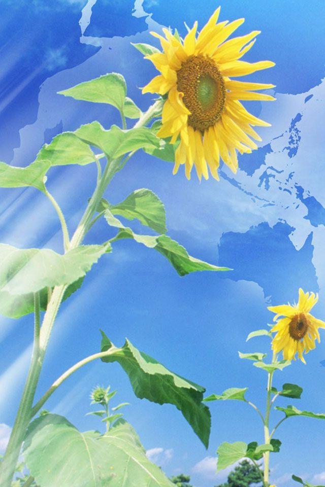 Sunflowers Across the World