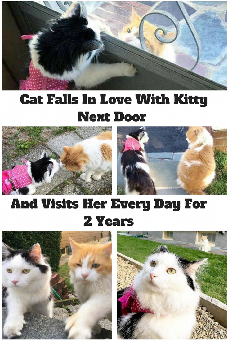 Cat falls in love with kitty next door and visits her