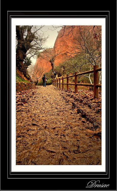 La Hojarasca by Drusae, via Flickr