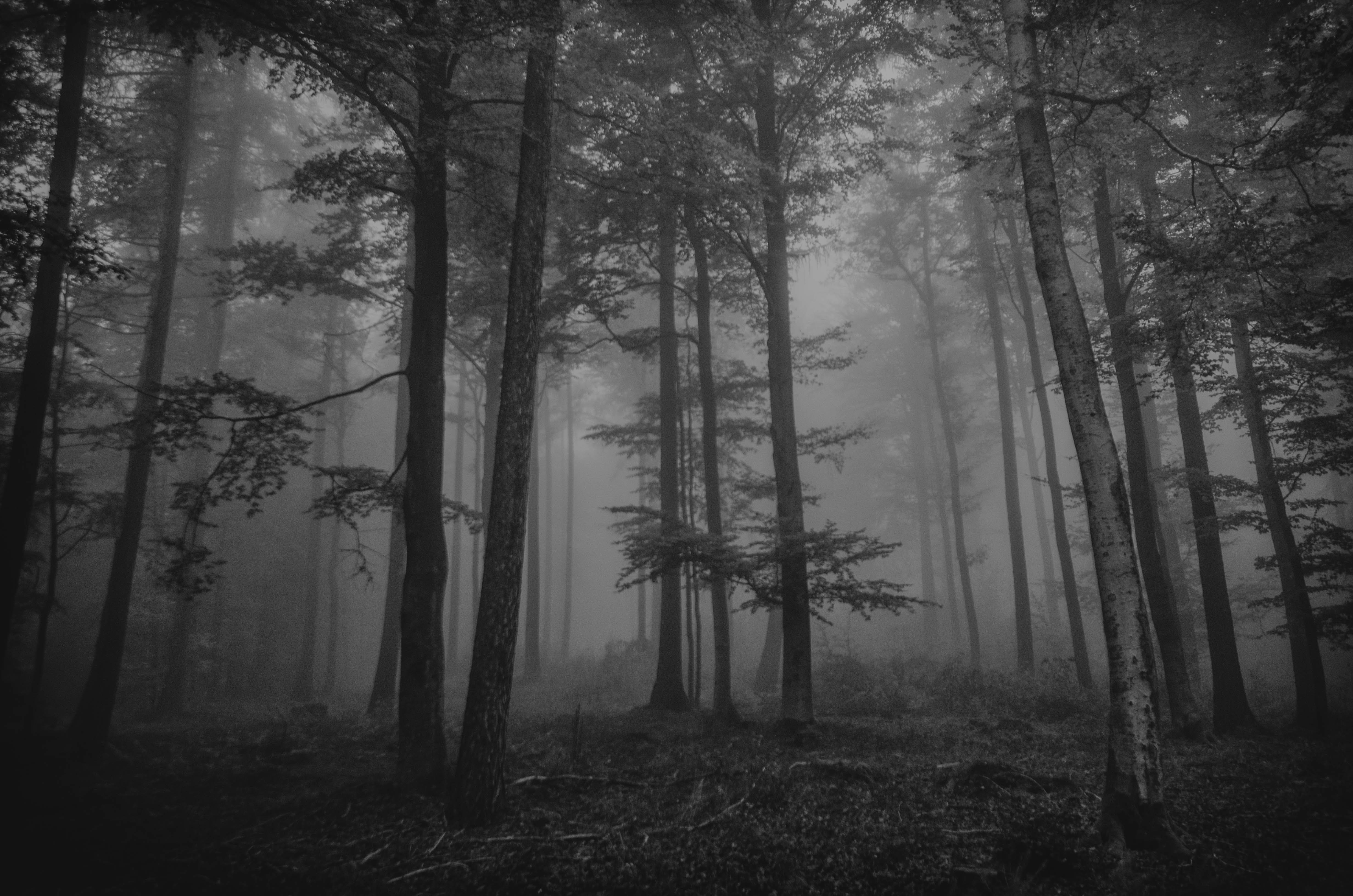 Road Forest Mist In High Definition Picture Wallpaper