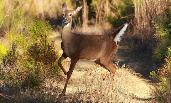 Whitetail Tips: How Wind Affects Deer Movement | Outdoor Life
