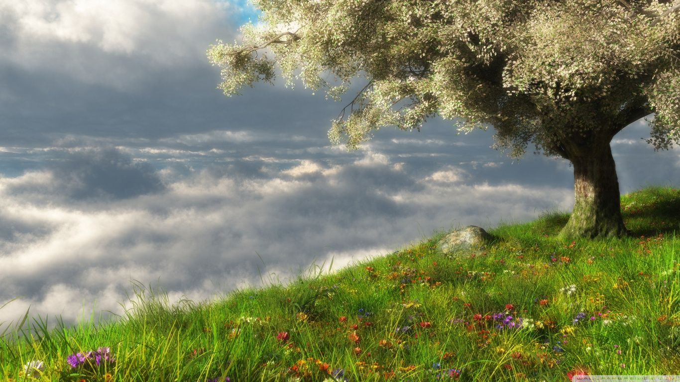 Spring Scenery Wallpaper For Computer Free Download Coffe