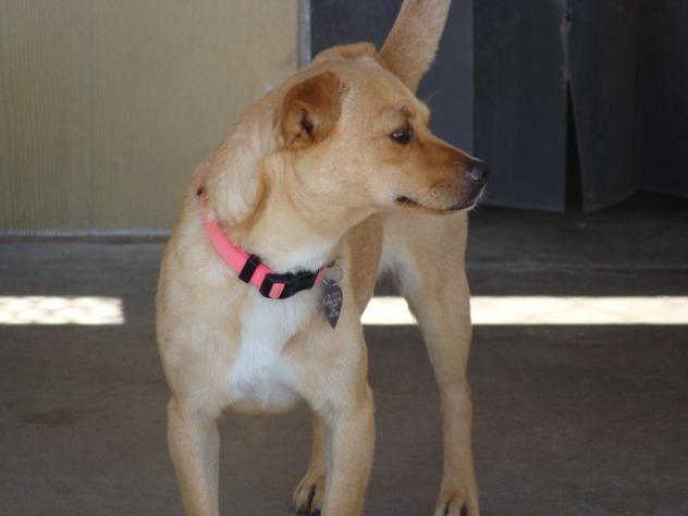 Adopt Ava On Adoptable Dachshund Dog Animal Rescue League Adoption