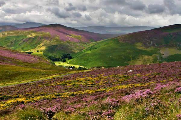 Fields Of Heather Ireland Ireland Tours Ireland Honeymoon Wicklow