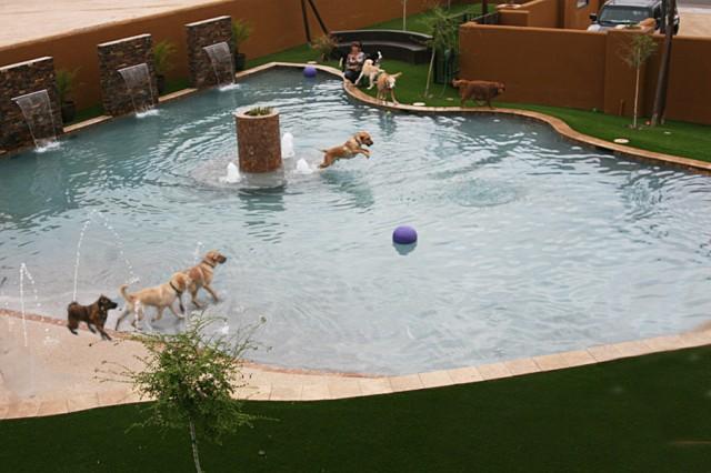Doggie Hotels   Always Unleashed Pet Resort   Dog Boarding ...