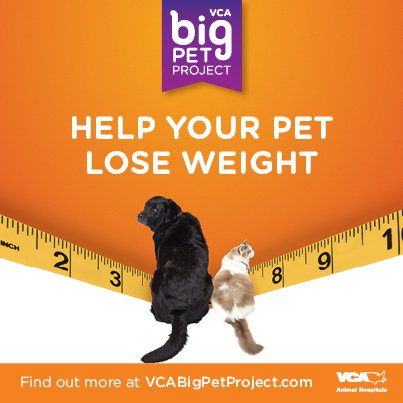 Pin By Anissa Zamudio On Weight Management Overweight Dog