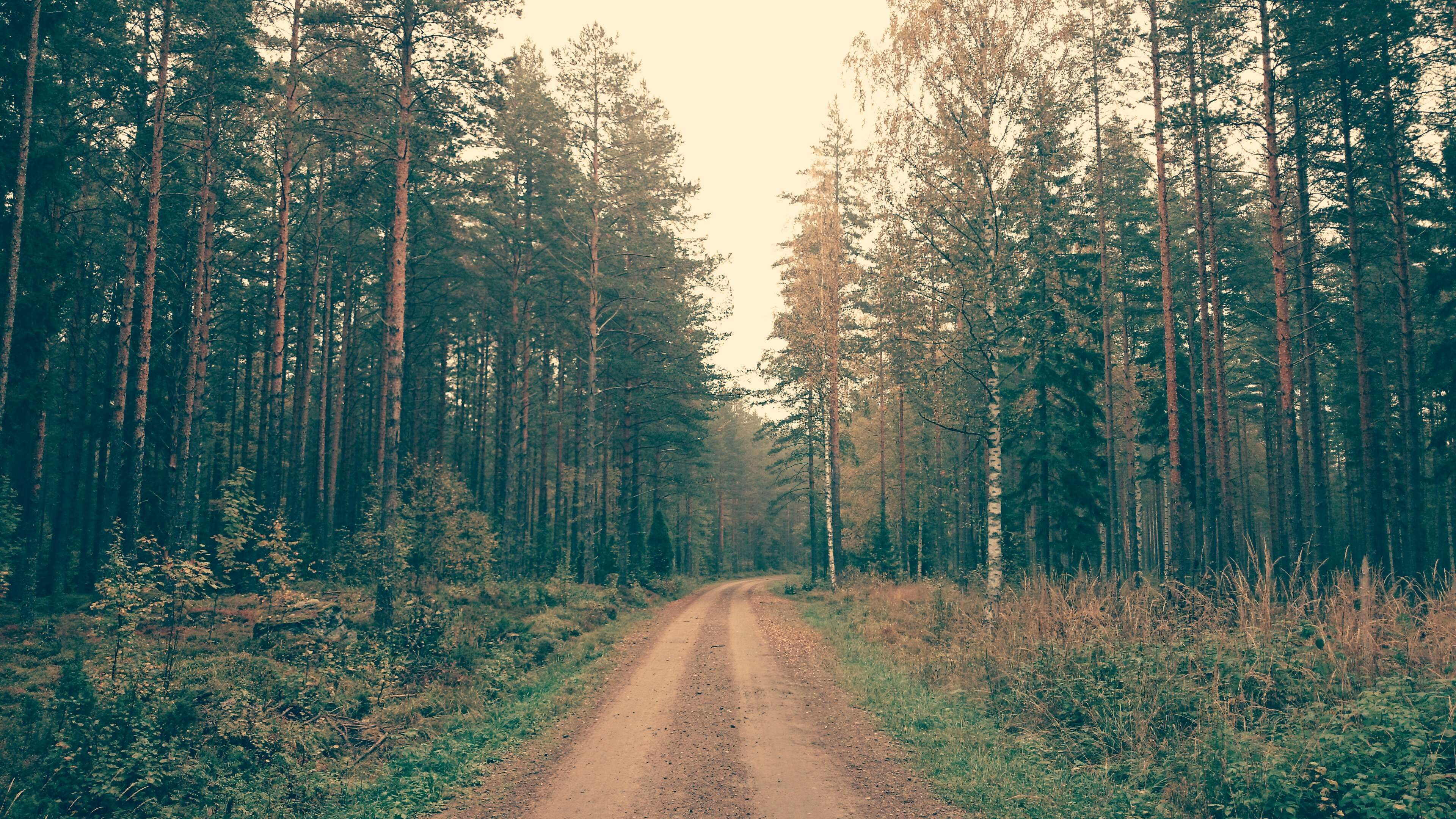 Aforestation Dirt Road Dusty Road Forest Nature Nature Wallpaper Pines Trees Tree Photography Scenic Photography Scenic Hd wallpaper path pine trees forest