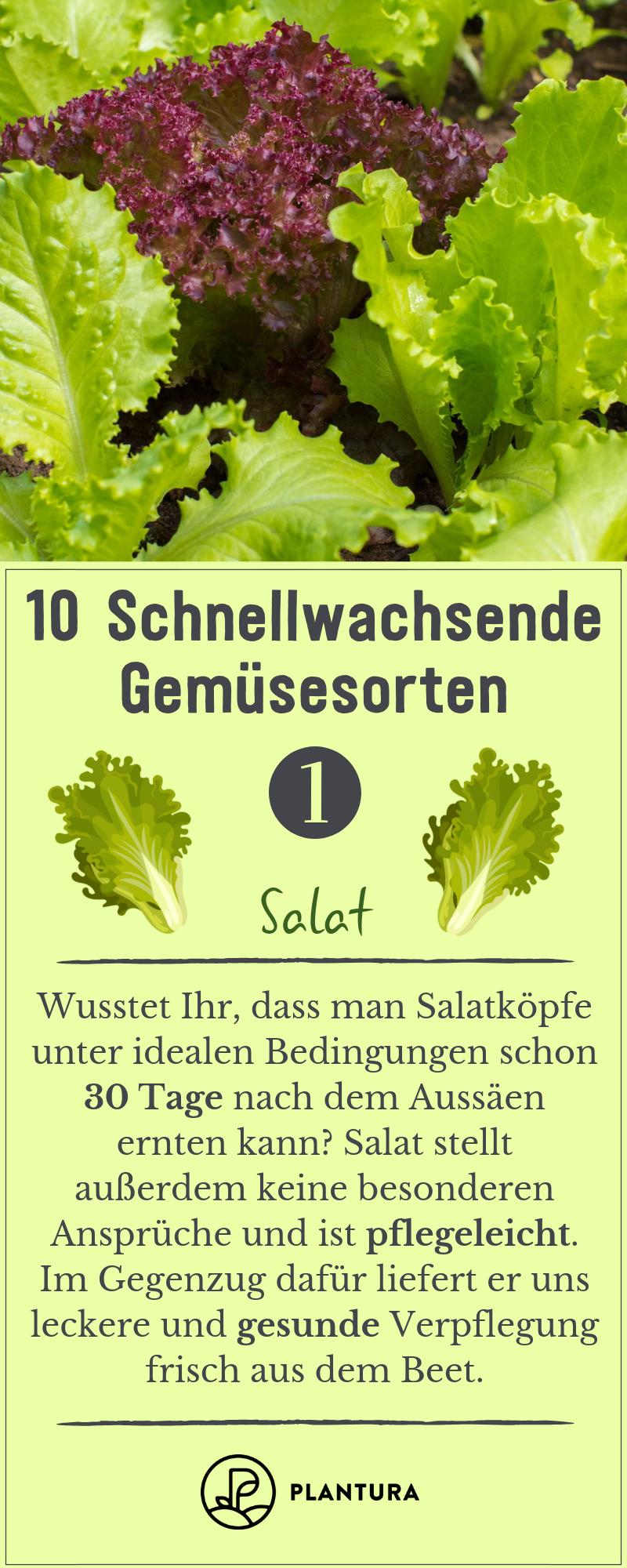 10 schnellwachsende Gemüsesorten - Plantura
