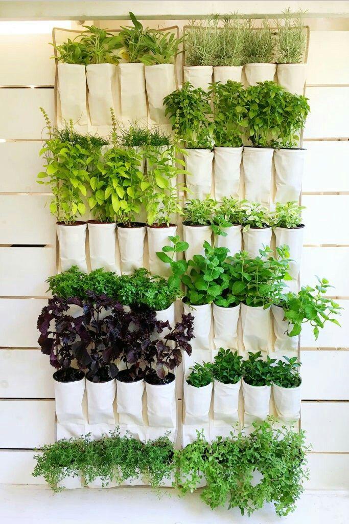 Vertical garden shoe organizer plantas Pinterest Huerto - jardineras verticales