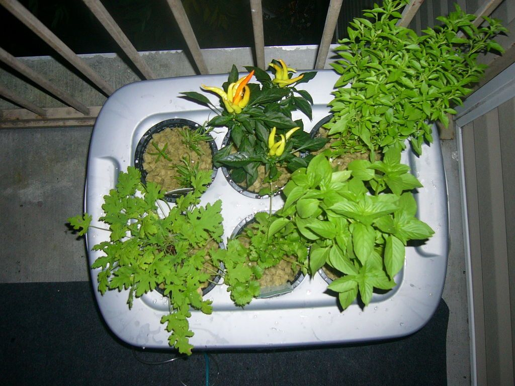 Hydroponics At Home And For Beginners Home Hydroponics 400 x 300