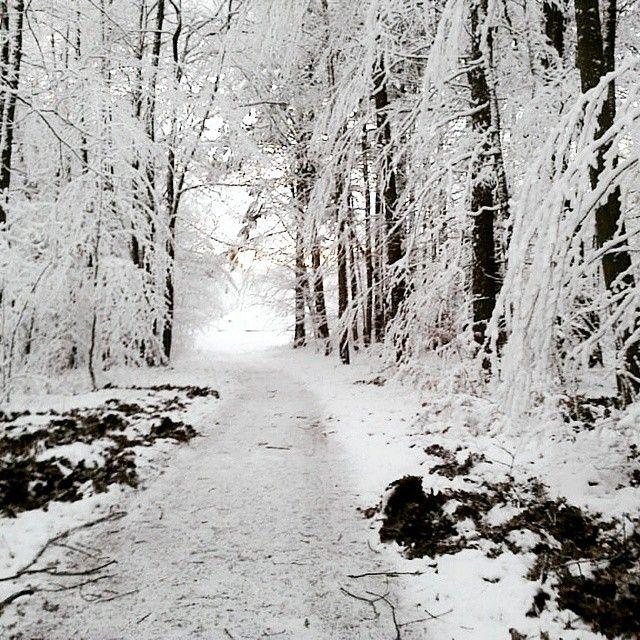 Happy New Year! :) #winter #nature #zima