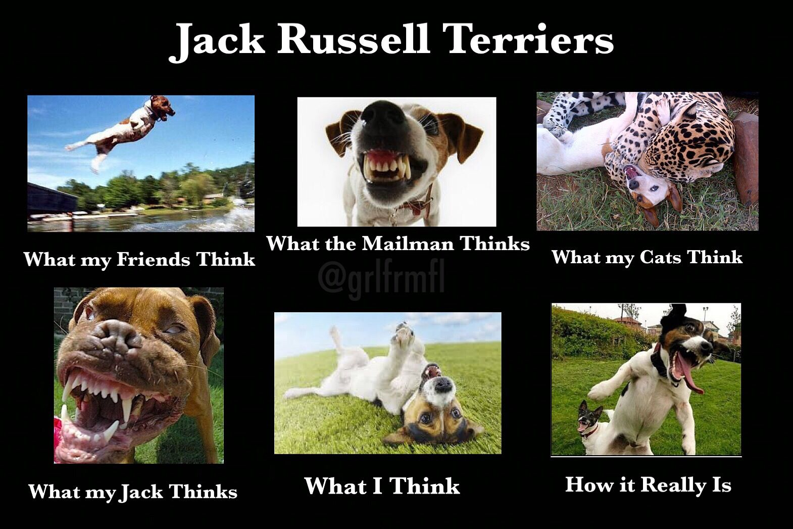 #truth Jack Russell  This is so funny!