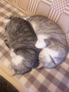 """""""tadiyuzumikan:  うちのネコ可愛い:ハムスター速報  """""""