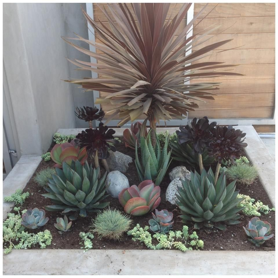 Succulent Flower Bed Maybe With Some Big Blooming Flowers
