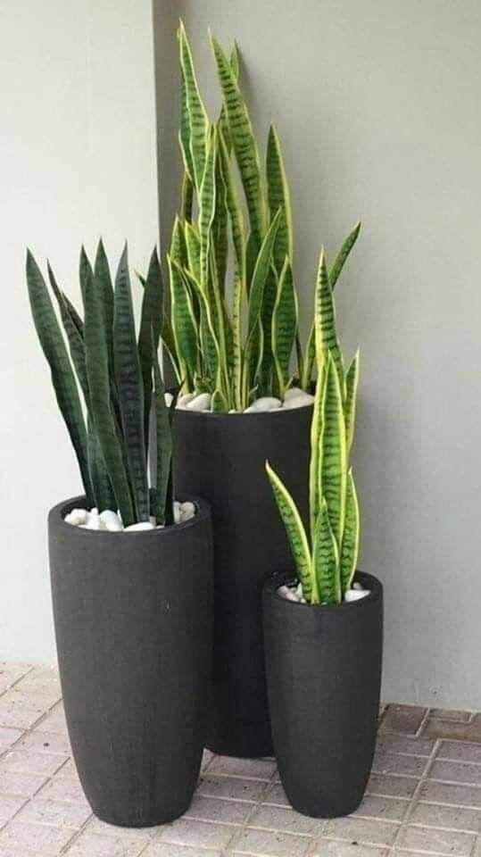 12 Plantas para decorar jardines