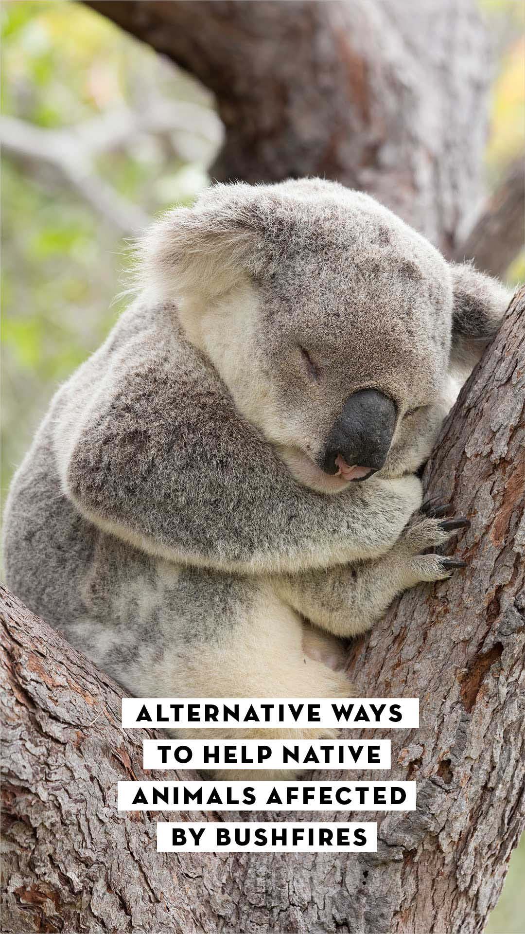 Alternative ways to help native animals affected by the