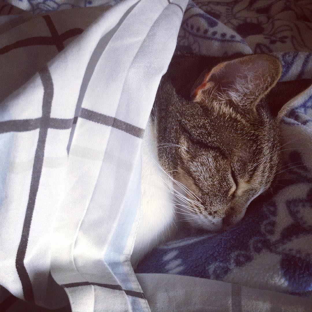 #Kika #rescuecat #myheart #madeinstreet #coldday #cat #cute #tabby