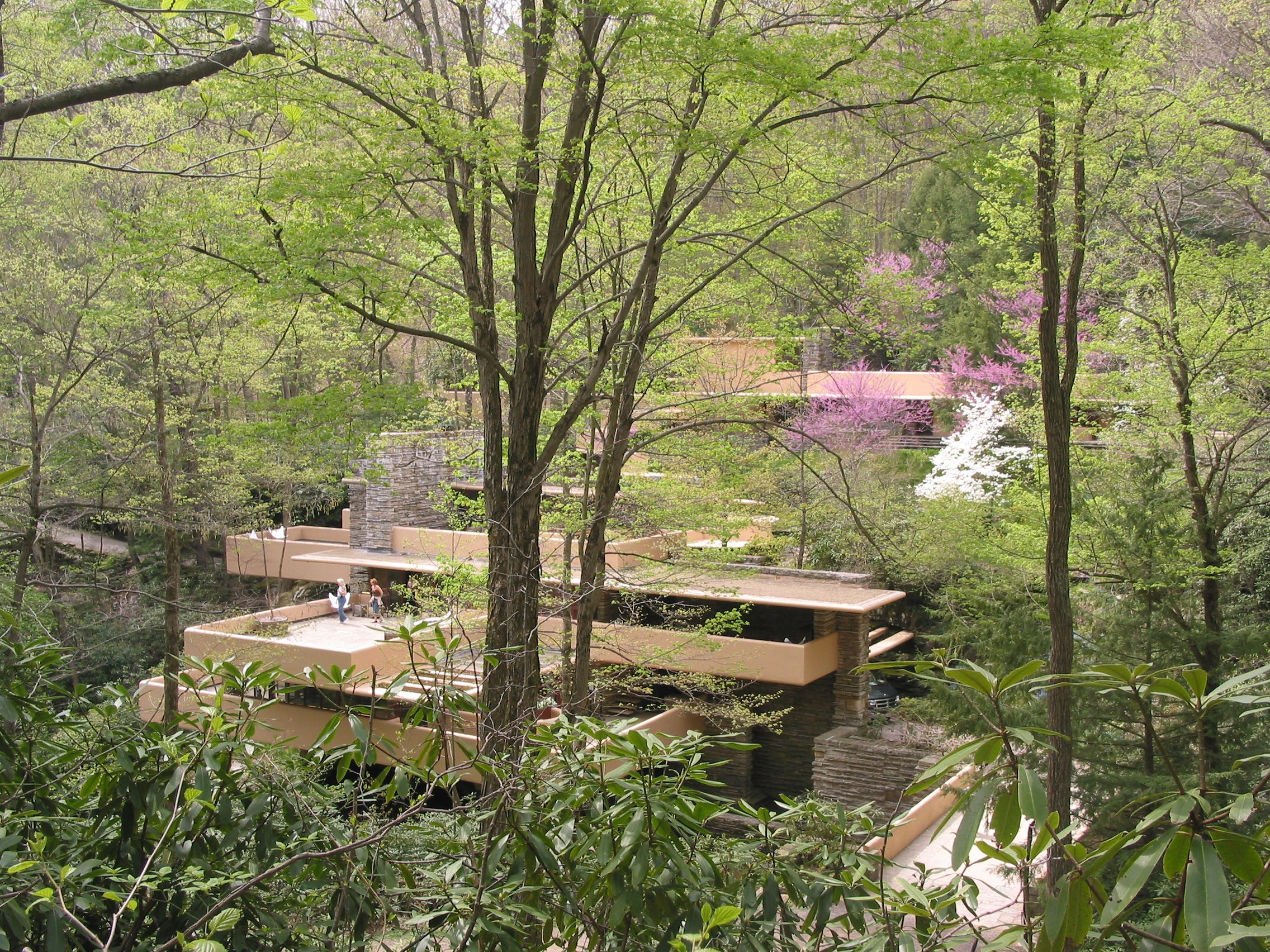 Davey's eyes are on one special gingko #tree at Frank Lloyd Wright's Home and Studio. #CoolTrees #TreePhotos
