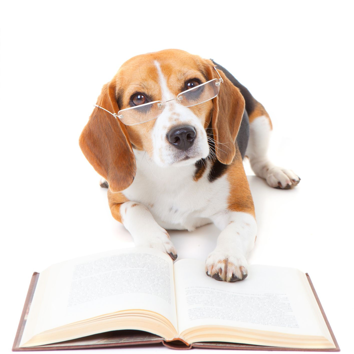 Beagle Reading Best Dog Names Cute Beagles Beagle Pictures