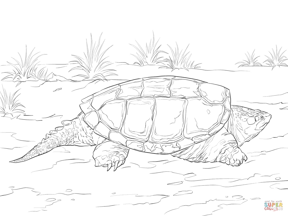 realistic common snapping turtle coloring page free printable
