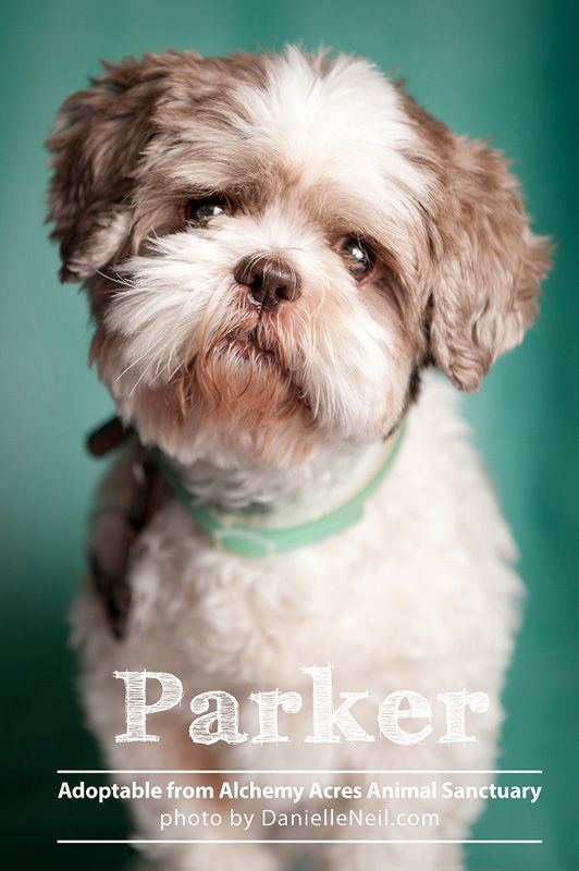 Parker Is Up For Adoption From Www Alchemyacres Org In Salem Ohio