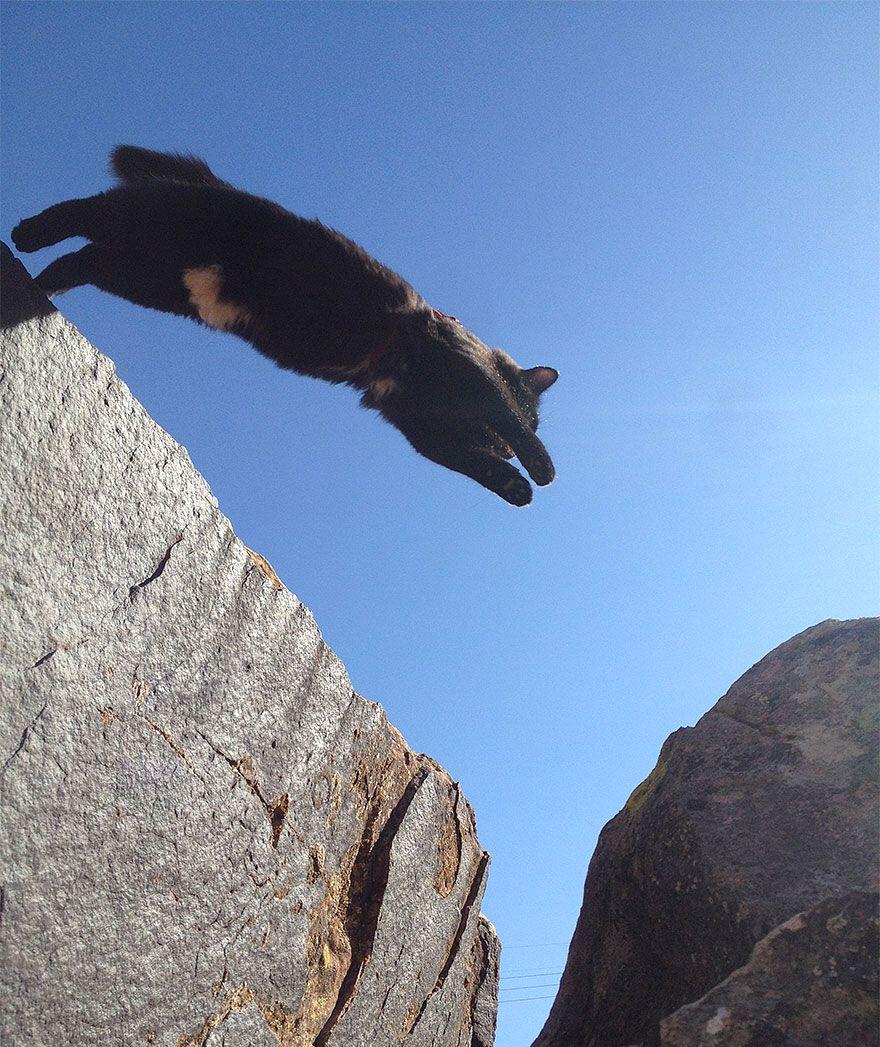Un chat adopté devient le partenaire d'escalade parfait de son maitre