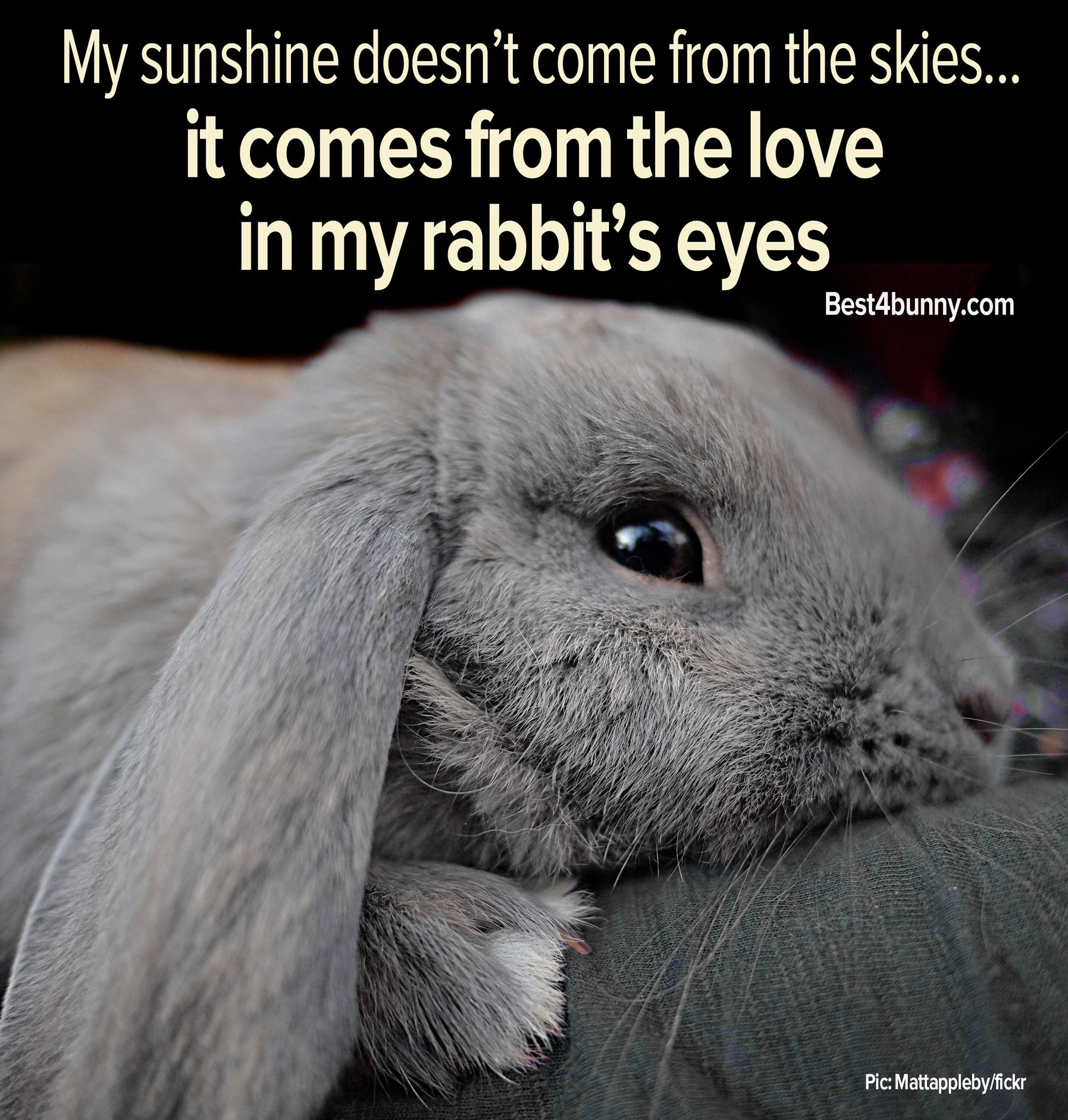and a constantly caged rabbit will never show such love indeed