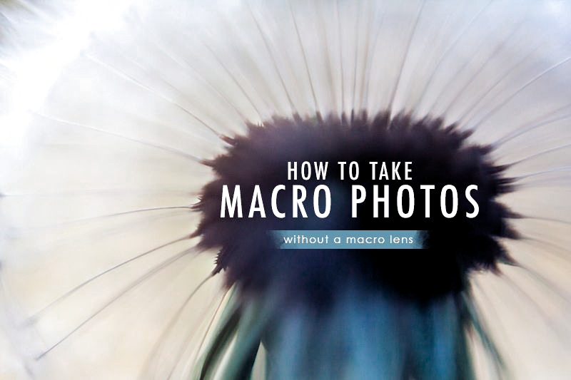 Photo of How to take macro photos without using a macr