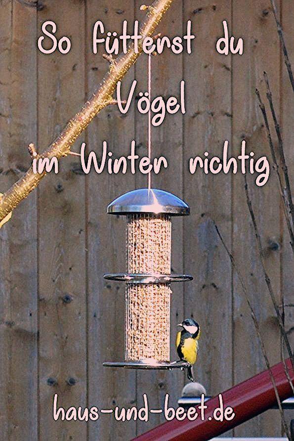 Photo of So füttert ihr Vögel im Winter richtig – Haus und Beet